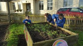 Tidying up our gardens.